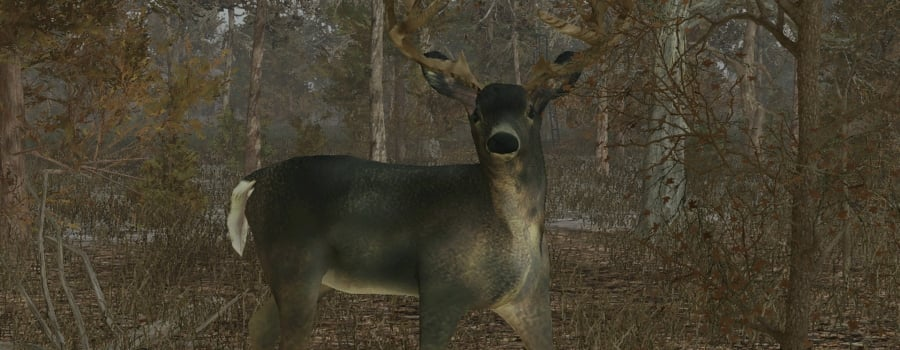Pro Deer Hunting